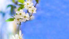 blomma tree Arkivfoto