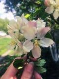 blomma tree f?r ?pple royaltyfri bild