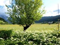 blomma treen Arkivbilder