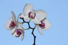 blomma tropiskt Royaltyfria Foton