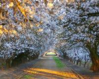 blomma tunnel Royaltyfria Bilder