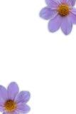 Blomma två i ram Arkivfoto