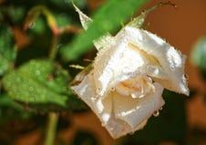 Blomma under regnet royaltyfri fotografi
