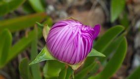 Blomma under solen stock video