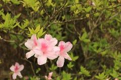 Blomma under solljus royaltyfri fotografi