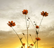 Blomma under solnedgång Royaltyfri Bild