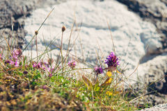 Blomma upp bakgrund, slut av vårblommor Royaltyfri Fotografi