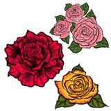 Blomma uppsättningen med röda, orange och rosa rosor Royaltyfria Foton