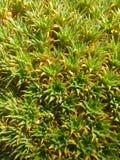 Blomma växt, buske, träd Arkivfoto