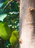 Blomma växt, buske, träd Fotografering för Bildbyråer