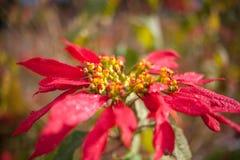 Blomma Växter och djur på Tenerife Royaltyfri Fotografi