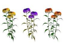 Blomma växtillustrationer Royaltyfri Foto