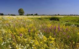 Blomma vattenängen Sommar fotografering för bildbyråer
