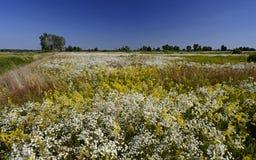 Blomma vattenängen Sommar royaltyfri foto