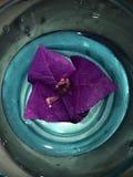 blomma vatten Royaltyfri Bild