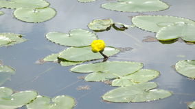 blomma vatten Royaltyfria Foton