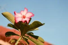 Blomma view4 Arkivfoto