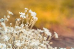 Blomma vildblommor N?ra ?vre f?r blommor royaltyfri foto
