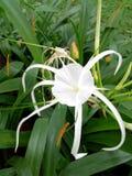 blomma white Arkivfoton