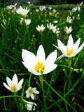 Blomma white blommar closeupen Royaltyfria Bilder