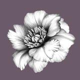 Blomma white för tree för bakgrundsteckningsblyertspenna Arkivfoto