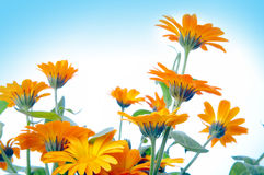 blomma yellow Arkivfoto