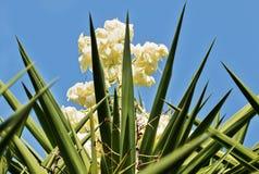 blomma yucca royaltyfri bild