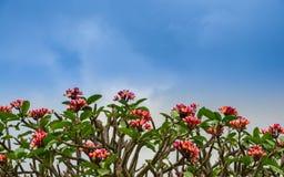 Blommor fodrar på blåttskyen, bakgrund Royaltyfri Bild