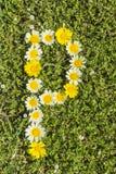 Blommaalfabet för bokstav P royaltyfria bilder