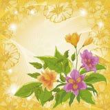 Blommaalstroemeria- och ipomoeakonturer Royaltyfria Bilder