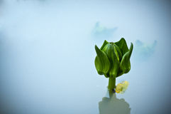 Blommabakgrund Arkivfoto
