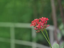 Blommabakgrund 14 Arkivfoto