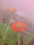 Blommabakgrund 11 Royaltyfria Foton