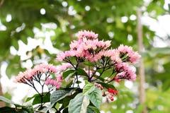 Blommabakgrund 223 arkivfoton