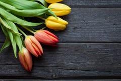 Blommabakgrund för ett kort till den internationella dagen för kvinna` s eller segerdagen på 9 kan Tulpan på en svart träbakgrund Royaltyfria Bilder