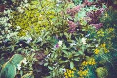 Blommabakgrund i sommarträdgården Arkivbild