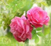 Blommabakgrund med strukturerar Royaltyfri Fotografi