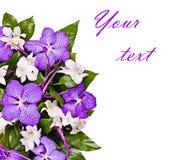 Blommabakgrund, orchids Fotografering för Bildbyråer