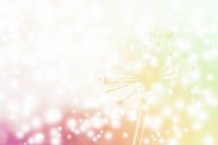 Blommabakgrund ut ur fokus med det mjuka filtret Royaltyfria Foton
