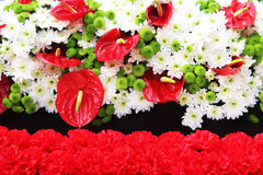 Blommabakgrunder Fotografering för Bildbyråer