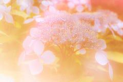 Blommabakgrunder i varmt färgrikt Royaltyfria Foton