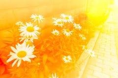 Blommabakgrunder i varmt färgrikt Fotografering för Bildbyråer
