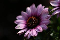 Blommabakgrundskontrast Arkivbilder