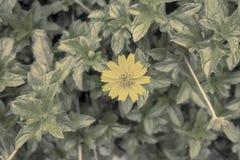 Blommabakgrundstappning Royaltyfri Fotografi