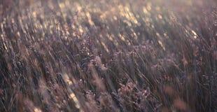 Blommabakgrundstextur på solnedgång arkivfoto