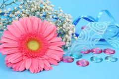 blommaband Arkivfoto