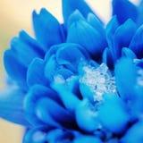 Blommablåklintträdgård royaltyfri foto