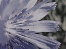 Blommablått royaltyfri bild