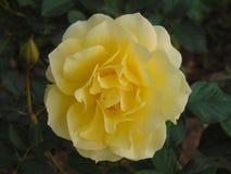 Blommablom Arkivbild