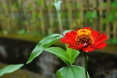 Blommablom i morgonen arkivbild
